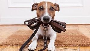 Los perros que obtuvieron buenos resultados en una prueba tendían ser mejores en las otras