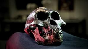 Reconstrucción del cráneo de Lucy, representante de los australopitecos, cuya historia puede ser reconstruida en parte a través de los dientes