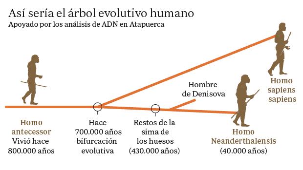 El ADN apoya el «árbol genalógico» en el que el Homo antecessor sería el ancestro común de neandertales y humanos