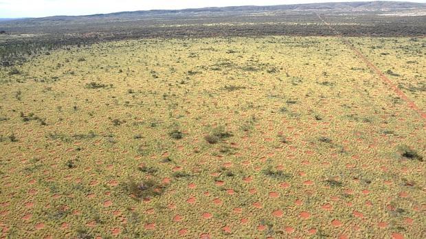 Vista aérea de los círculos de hadas australianos que se extienden de forma homogénea sobre el paisaje