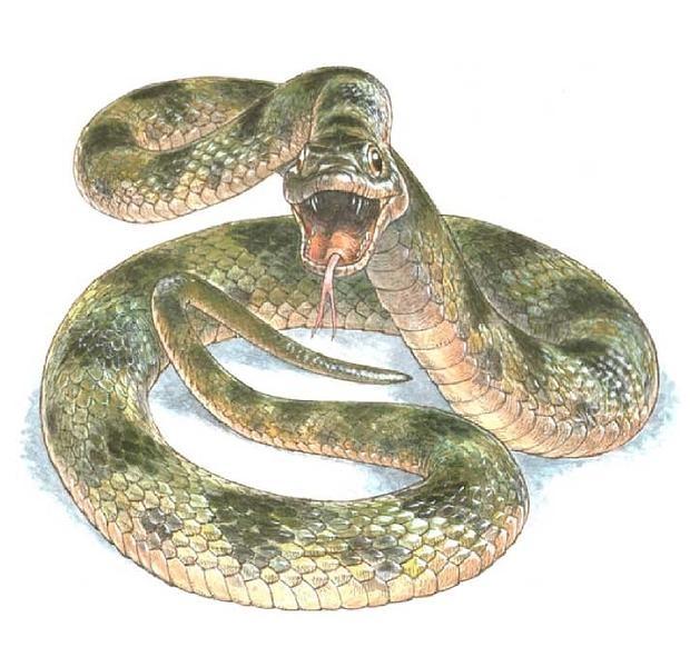 Reconstrucción del aspecto en vida de la serpiente de Libros