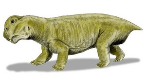 Los listrosaurios, del tamaño de hipopótomos, menguaron hasta el de un perro