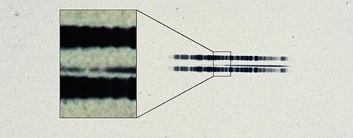 Espectro de 1917 de la estrella Van Maanen