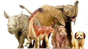 Un bebé de Rapetosaurus, comparado con otros mamíferos recién nacidos
