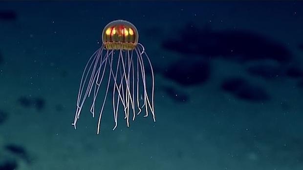 La extraña medusa, fotografiada por el robot explorador de la NOAA