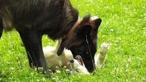 Juego entre un adulto y un cachorro