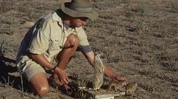 Un investigador pesa a los suricatos