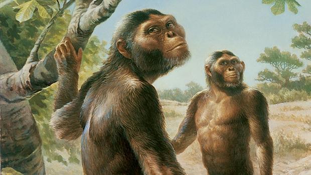 La especie Australopithecus afarensis compartía espacio con otros protohumanos