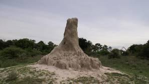 Las termitas, granjeras en la Tierra desde hace 25 millones de años