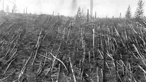 La explosión derribó 80 millones de árboles
