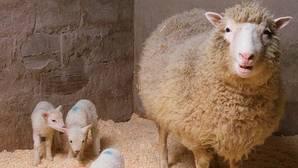 Se cumplen 20 años de la clonación de la oveja Dolly