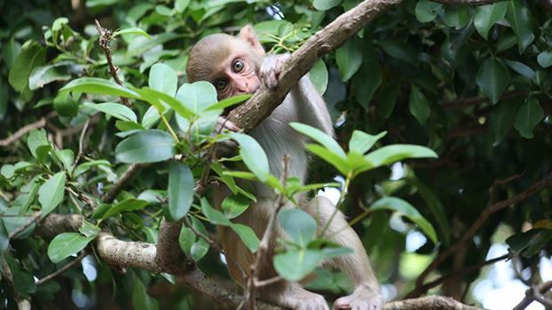 Los monos también se dan cuenta de su propia ignorancia