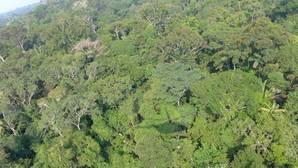 El último árbol del Amazonas será descubierto dentro de 300 años