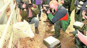 De la oveja Dolly a los miniórganos de laboratorio