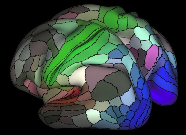Zonas conectadas para la audición (rojo), tacto (verde) y visión (azul).