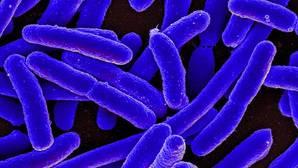 Fotografía de E. coli, una de las 500 especies que pueden vivir en el intestino humano