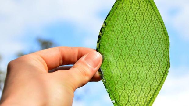 Esta hoja artificial funciona como una placa solar supersofisticada