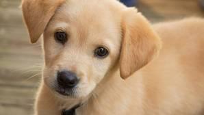La mayoría de los perros prefieren tu cariño antes que una salchicha