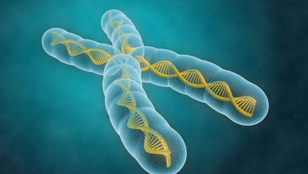 El estudio ha multiplicado por diez el número total de genomas incluidos en investigaciones similares y ha llegado a los 60.706 individuos analizados