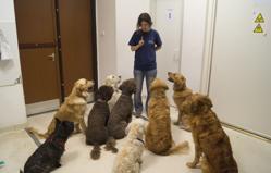 Los canes prestan atención a una investigadora