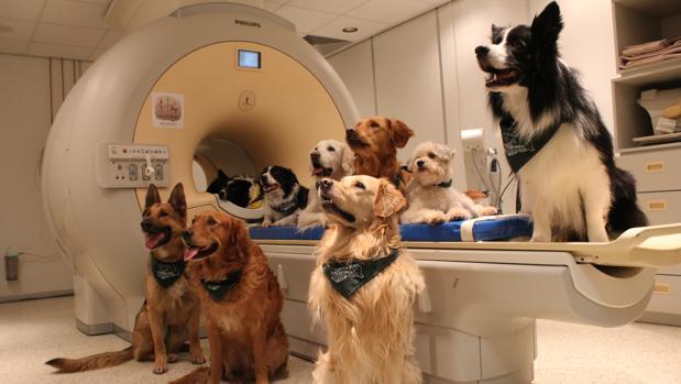 Vídeo: Tú perro te entiende