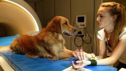 Una investigadora habla a uno de los perros