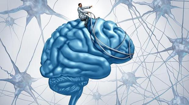 En concreto, parece que la sensibilidad frente a la dopamina de una estructura cerebral está positivamente relacionada con esta competencia