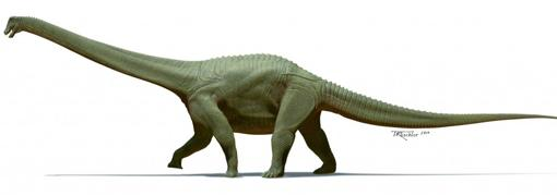 Así era el Diamantinasaurus matildae
