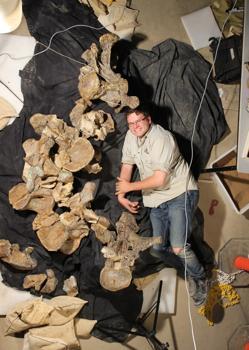 Stephen Poropat con cinco vértebras de la espalda de la nueva especie de titanosaurio