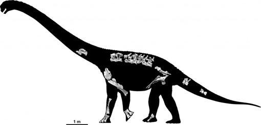 Reconstrucción del esqueleto del nuevo dinosaurio Savannasaurus elliottorum