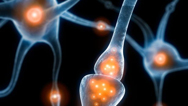Las neuronas no necesitan estar activas para guardar un reucerdo