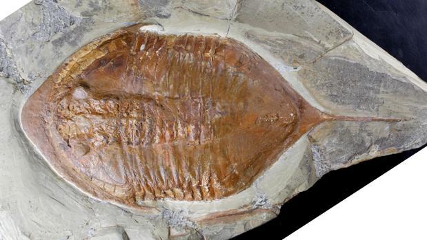 Unas patas de hace casi 500 millones de años