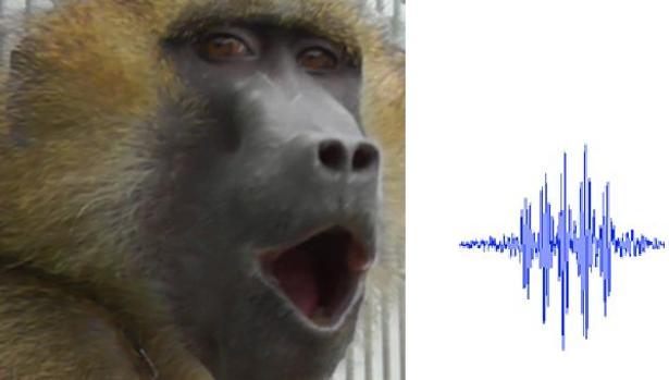 Los Monos Que Emiten Sonidos Similares A Las Cinco Vocales Humanas