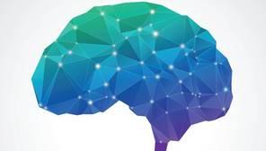Seis desconcertantes opiniones sobre el cerebro