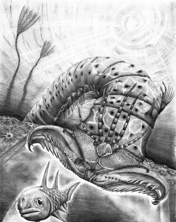 El gusano tenía unas grandes mandíbulas para capturar a sus presas