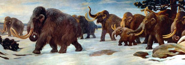 Los mamuts desaparecieron del continente hace unos 10.000 años