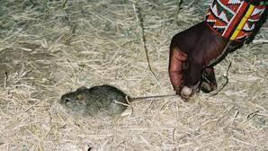 Un ratón en un pueblo masai del sur de Kenia