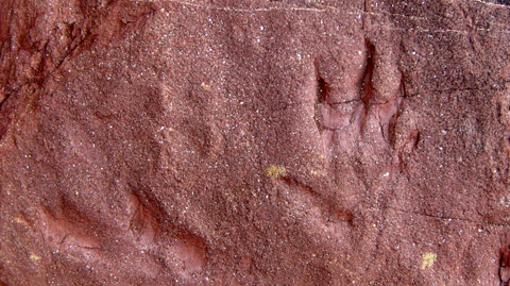 Huellas fósiles