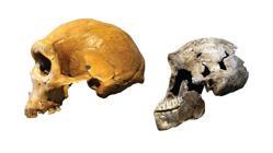 Homo naledi era muy diferente de los humanos arcaicos que vivieron en la misma época. Izquierda: Cráneo de un ser humano arcaico encontrado en Zambia. Derecha: el cráneo de «Neo»