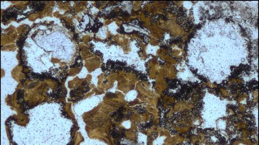 Burbujas acumuladas en los depósitos del cratón de Pilbara. Evidencia más antigua de vida primitiva en tierra firme