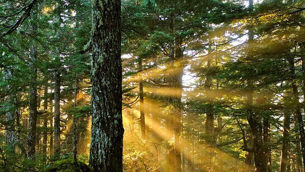 La luz está determinada por la energíay la entropía