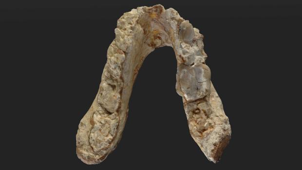 ¿Prehumanos en los Balcanes hace 7 millones de años?