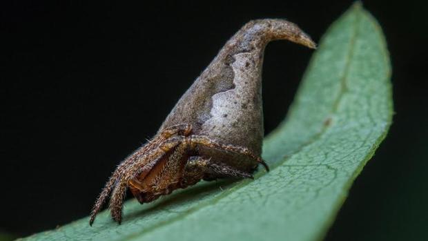 Las diez nuevas especies más asombrosas descubiertas en 2016