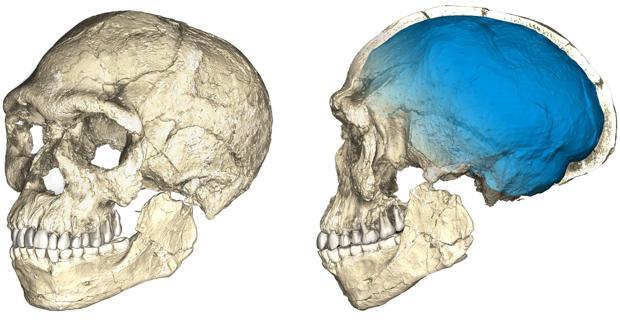 Recontstrucción del cráneo hallado en Jebel Irhoud, en Marruecos
