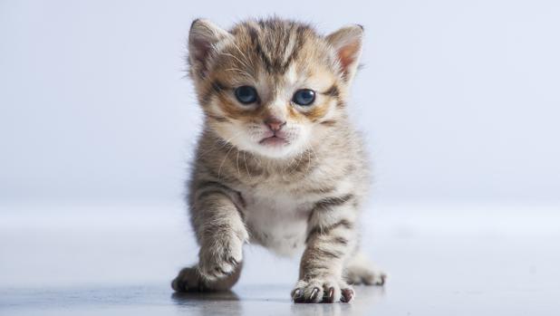 Un gatito atigrado