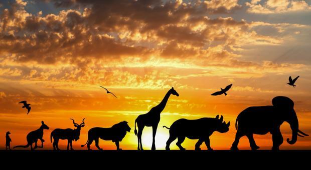 Un nuevo modelo apoya la idea más polémica de cómo funciona la evolución