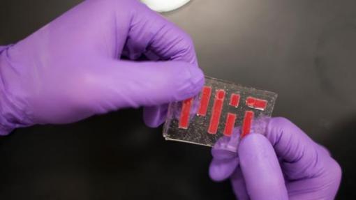 El nuevo material es elástico como la gelatina y no se seca