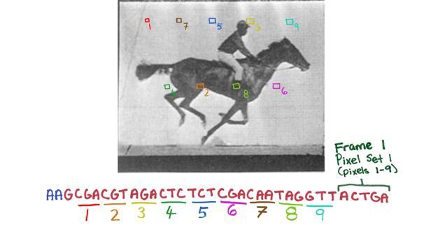 «El caballo en movimiento», el corto introducido en el ADN de una bacteria