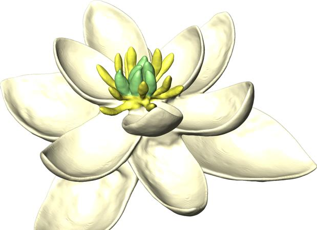 Posible aspecto de la primera flor. Tenía tépalos y órganos reproductivos masculinos y femeninos