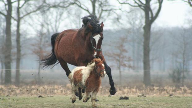 Por qué los caballos son los únicos animales que solo tienen un dedo?